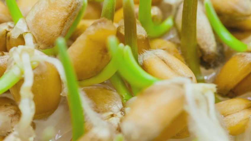 Pachete de stimulare a germinatiei semintelor